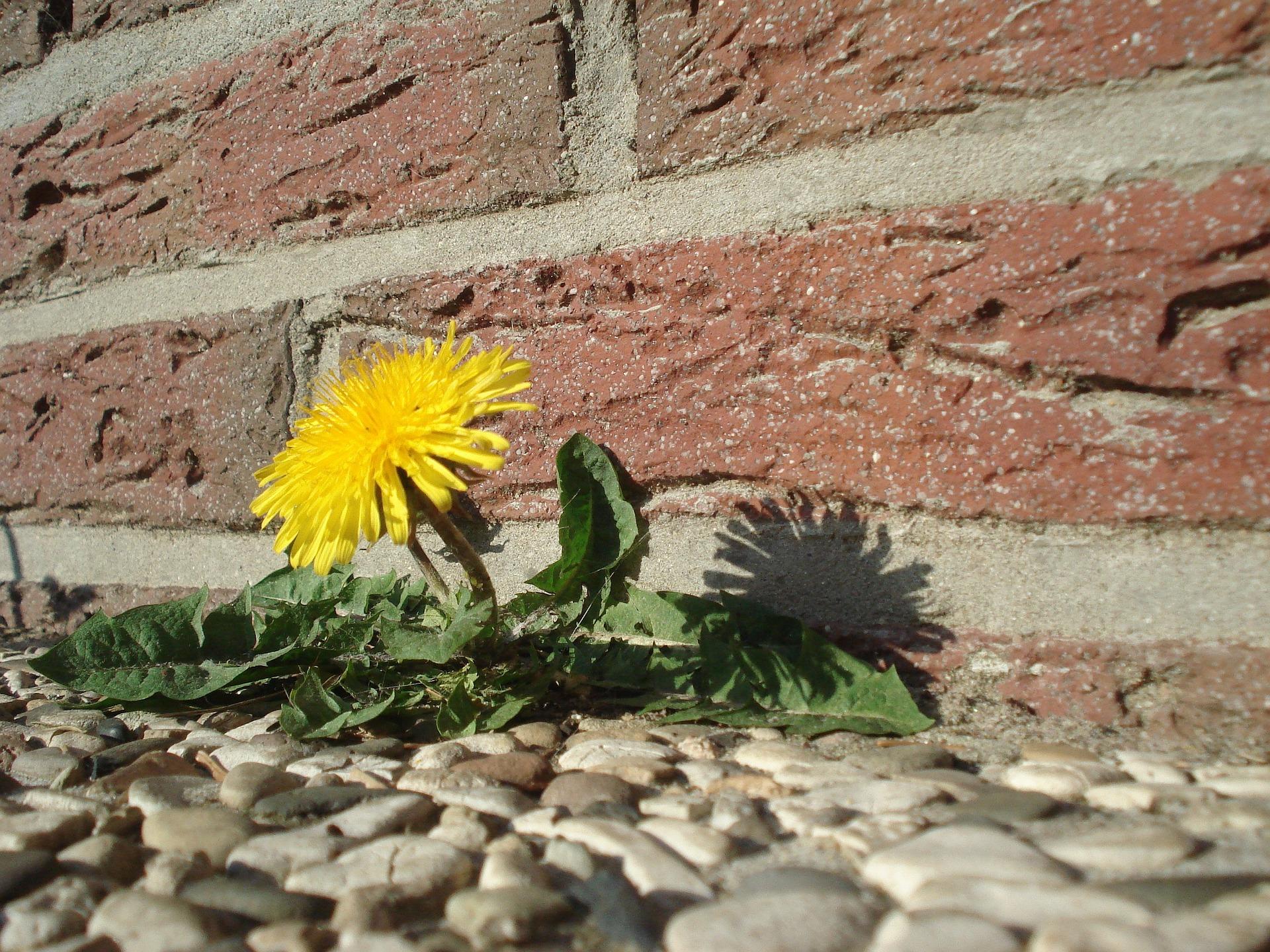 Resilienz – Immunsystem der Seele